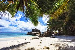 Palm trees on paradise beach at anse patates, la digue, seychell Stock Images
