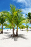 Palm trees on paradise island Royalty Free Stock Photos