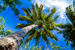 Palm trees in a paradise island of Maldives Stock Photos