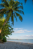Palm trees at paradise like sand beach in Thailand Stock Photography