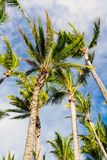 Palm trees in Paradise Stock Photos