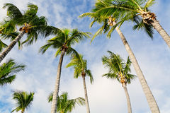 Palm trees in Paradise Stock Image