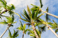 Palm trees in Paradise Royalty Free Stock Photography
