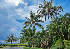 Palm trees in the park on the coast of Asia Stock Photography