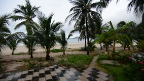 Palm trees at the park. In Con Dao island, Vietnam stock video