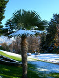 Palm trees in park covered in snow. Against clear blue sky in Lugano, Switzerland stock photography