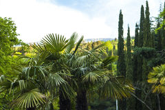 Palm trees in park Stock Image