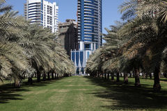 Palm Trees Park in Sharjah City. United Arab Emirates royalty free stock photos