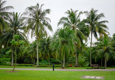 Palm trees at the park Royalty Free Stock Photography