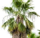 Palm trees in the park. Subtropical climate.  royalty free stock photos