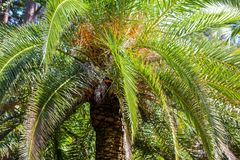 Palm trees in the park. Subtropical climate.  stock photos