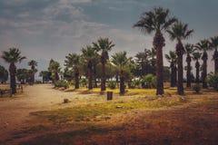 Palm trees park stock photo