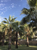 Palm trees at park Stock Photography