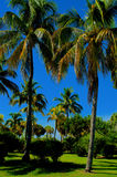 Palm trees in a park. Vibrant green park with palm trees and bushes Stock Image