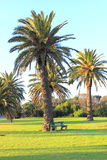 Palm trees in parkland Stock Images