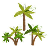 Palm trees pattern Stock Photography
