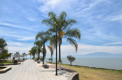 Palm trees at the paved embankment along Chapala lake Royalty Free Stock Images
