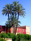 Palm trees Peeking over a dazzling world.. royalty free stock photography