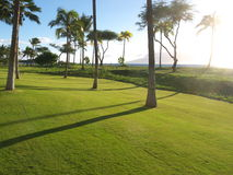 Palm trees on perfect lawn, tropical setting. Wonderful grass lawn in a tropical setting with the ocean in the background and palm trees Stock Photos