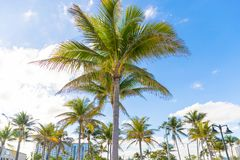 Palm Trees - Perfect palm trees against a beautiful blue sky.  Stock Photos