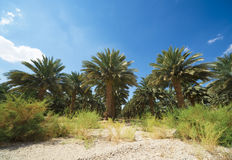 Palm trees perspective view Royalty Free Stock Photo