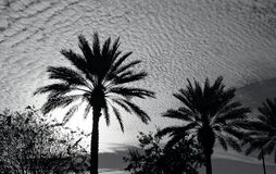 Palmtrees are very common trees in the tropical countries.