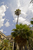 Palm trees on Placa Reial in Barcelona stock images