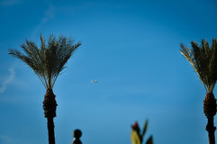 Palm trees and plane Royalty Free Stock Photos