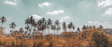 Palm trees plantation Stock Images