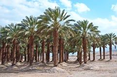 Palm trees . Stock Image