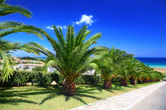 Palm trees planted in row along mall. Leading to sea on sunny day Royalty Free Stock Photos