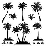Palm Trees and Plants Silhouettes Royalty Free Stock Image