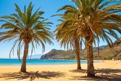 Palm trees Playa las Teresitas Beach, Tenerife stock image