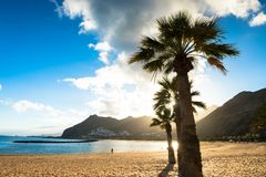 Palm trees Playa de las Teresitas Beach, Tenerife Stock Photography