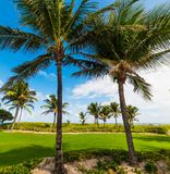 Palm trees in Pompano Beach shore on a clear day. Southern Florida, USA royalty free stock photo