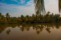 Palm trees and pond. Goa. India Stock Photo