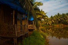 Palm trees and pond. Goa. India Stock Image