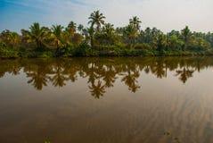 Palm trees and pond. Goa. India Royalty Free Stock Photos