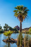 Palm Trees by Pond. Palm trees soak in the late afternoon sunlight by one of Papago Park`s ponds in Phoenix, Arizona Royalty Free Stock Image