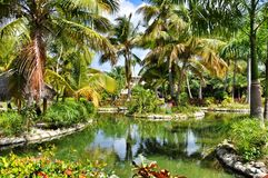 Palm trees and a pond in a tropical Paradise Royalty Free Stock Photography