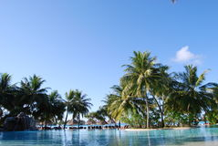 Palm trees and pool Royalty Free Stock Images