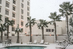 Palm Trees and Pool in Snow Stock Images