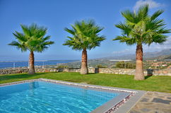 Palm Trees by the pool Stock Image