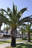 Palm trees in the Public Park Garden from the Rethymno city of Crete in Greece. Beautiful Palm trees in the Public Park Garden from Rethymno city of Crete in stock photos