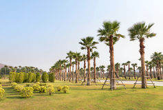 Palm trees in public park under blue sky stock image