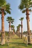 Palm trees in public park under blue sky stock photos