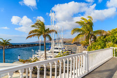 Palm trees in Puerto Calero marina Royalty Free Stock Images