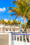 Palm trees in Puerto Calero marina Stock Photography
