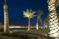 Palm trees at Qatar Foundation Stock Photography