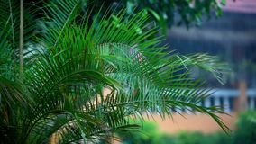 Palm trees and rain stock video footage